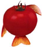 tomatoe_fins