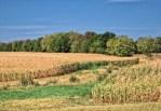 2012 U.S. drought, credit: Theresa L Wysocki.
