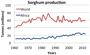 sorghum production