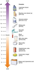 A handy guide to PH levels, courtesy of Wikipedia Commons. The human stomach is about as acidic as lemon juice; the insect stomach is about as alkaline as bleach.