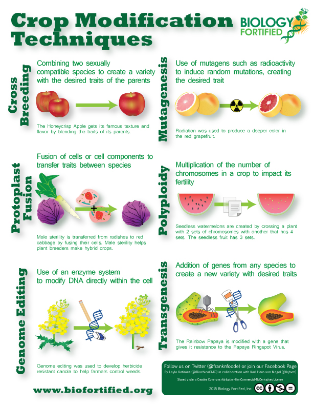 crop modification techniques infographic biology fortified inc  crop modification techniques vertical hq
